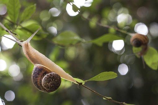 snail-1597846__340